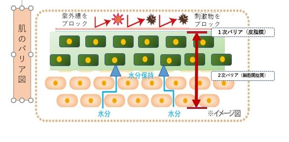 肌バリア図