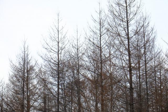 冬のイメージ画像
