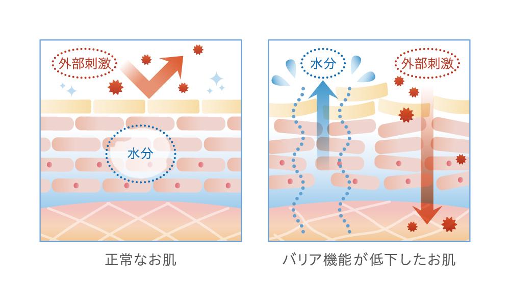 正常な肌とバリア機能が低下した肌の画像